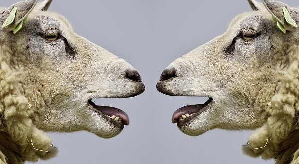 PPR disease in Sheep and Goats.