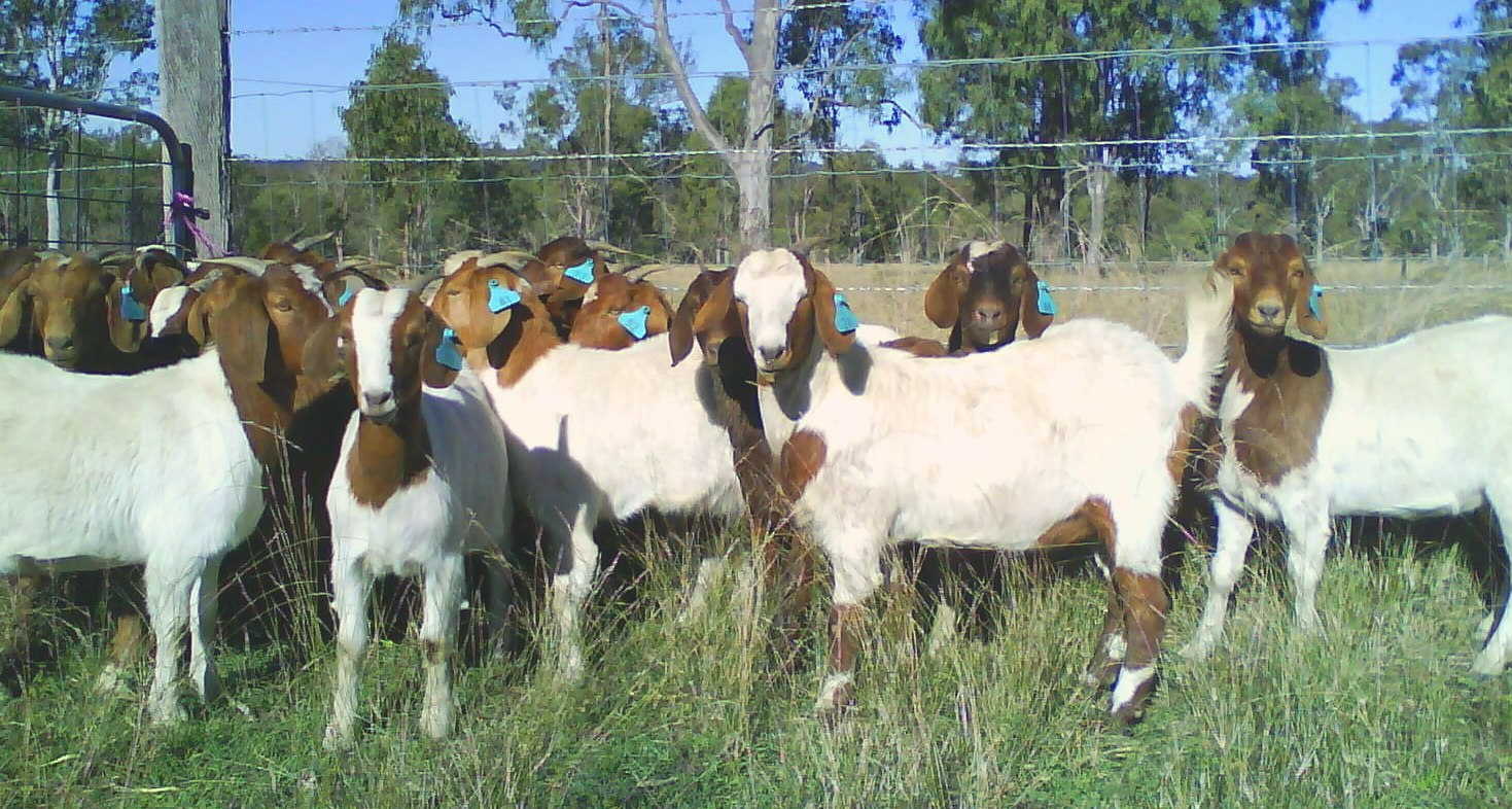 How to Start Sheep Farming in India
