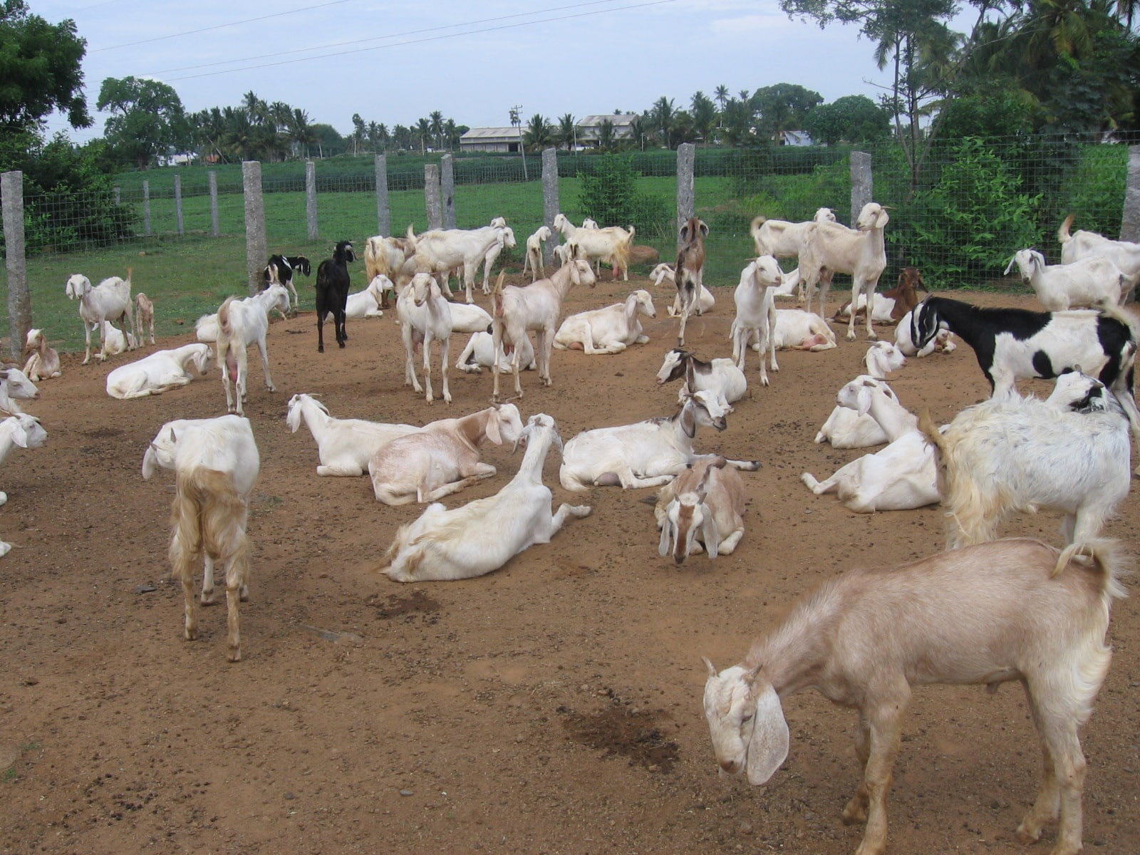 how to set up a goat farm