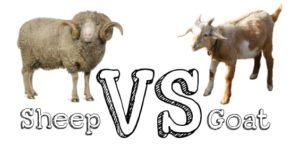 Sheep farming advantages