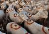 Sheep farming tips.