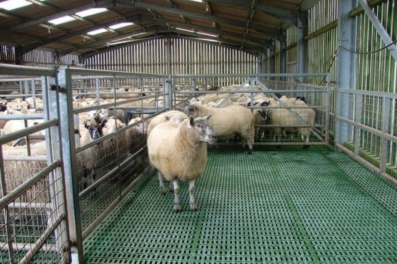 Sheep Shed.